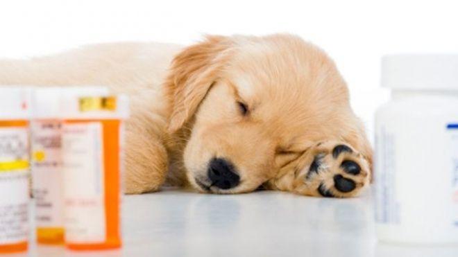 Как дать собаке таблетку?