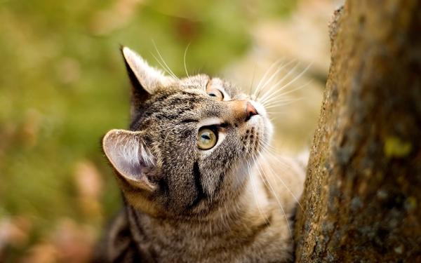Как помочь, если кошка упала с высоты?