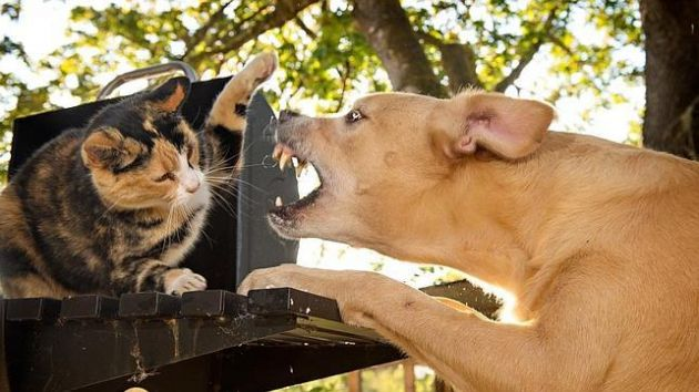 Едят ли собаки кошек?