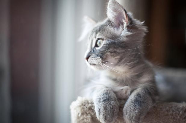 Кастрация котов как меняется поведение
