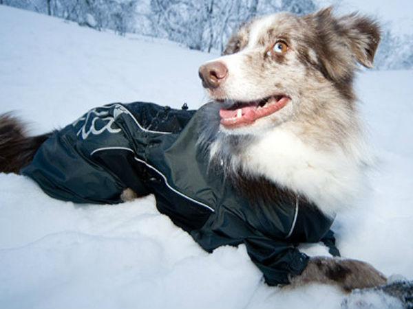 Нужна ли домашним собакам одежда?