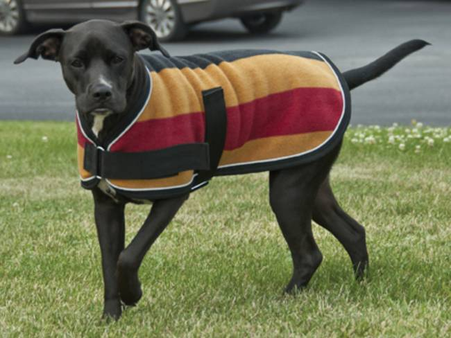Попона для собаки: для дома и для улицы