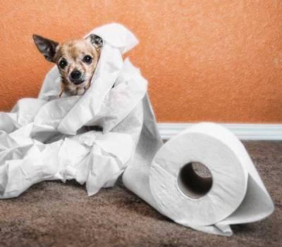 Что делать если у собаки понос