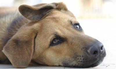 Что делать если собака отравилась