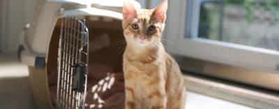 Успокоительные средства для кошек