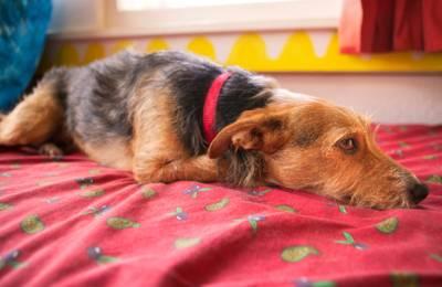 Болезни почек у собак симптомы и
