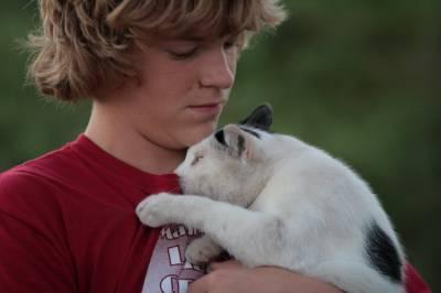 Самые ласковые кошки это кошки любых