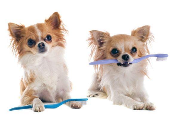 Стоматит у собак лечение