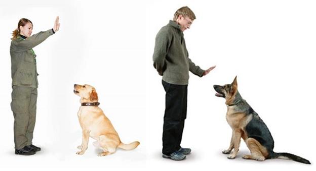 Команда для собаки своими руками