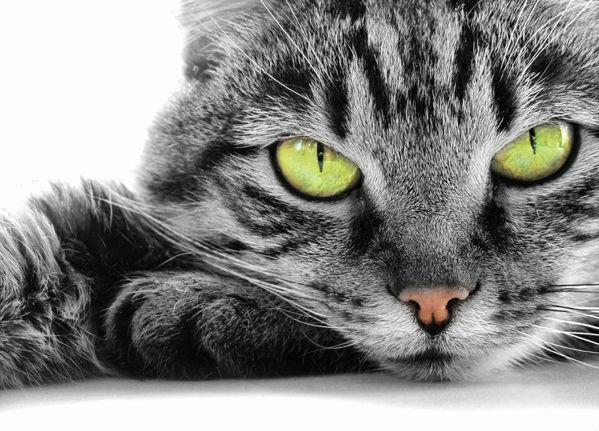 Сопли зеленые у котов