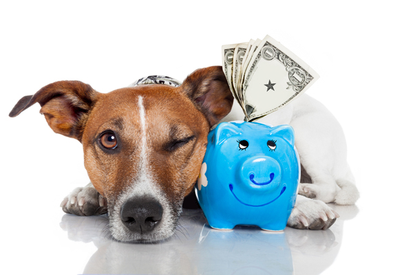 Почему у щенка или взрослого пса именно такая цена?