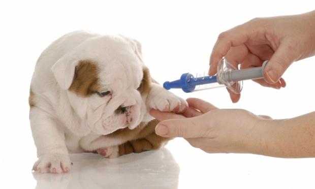 Вакцину от бешенства вводят