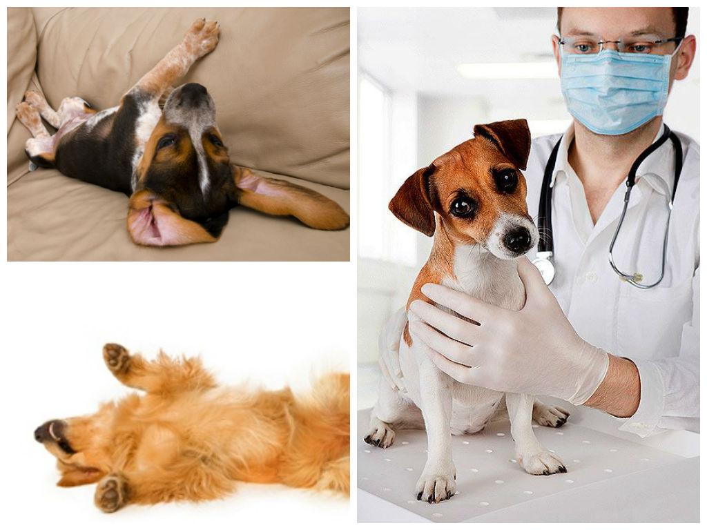 Диетотерапия эпилепсии у собак сводные данные - epidog
