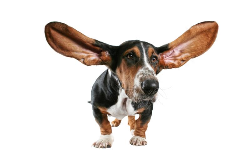 Отит у собак: виды и симптомы