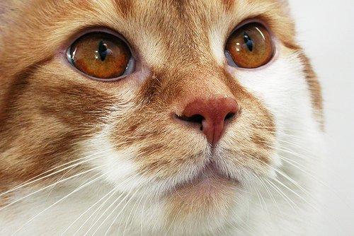 Чем лечить выделения из носа у кота