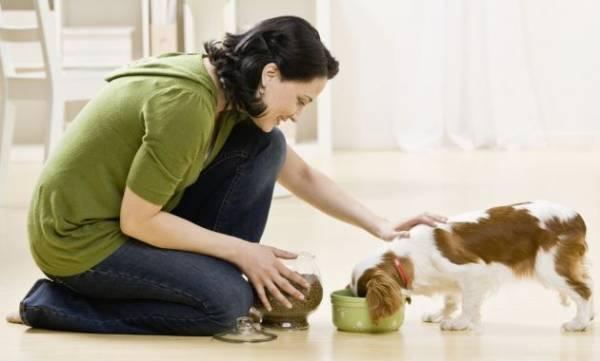 У собаки запор что делать первая помощь