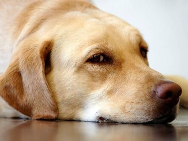 Эпилепсия у собак причины