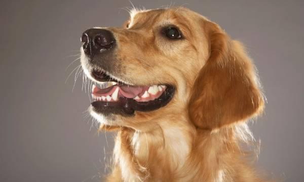 здоровая собака отказывается от еды