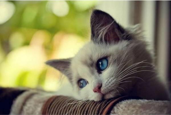 У кота пахнет изо рта тухлятиной