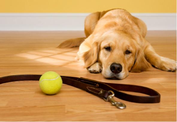 Миозит у собак: классификация, причины возникновения и методы лечения