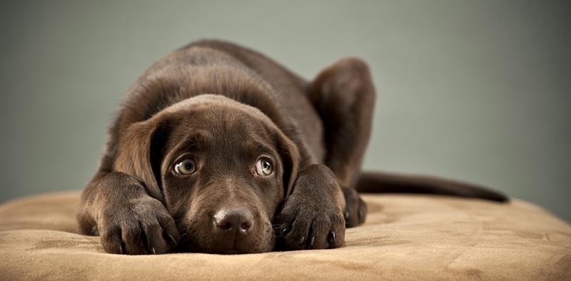 Как сделать чтоб собака не боялась хозяина