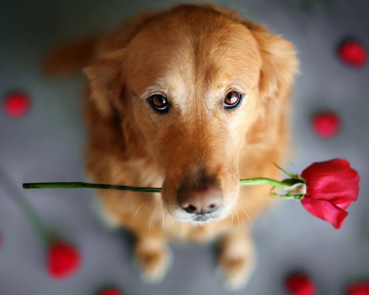 Первые признаки беременности у собак после вязки