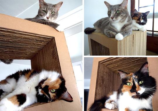 Когтеточка для кошек своими руками пошагово фото для 138