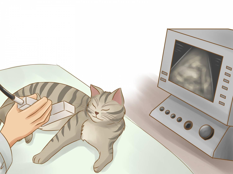 Бить кошку во время беременности