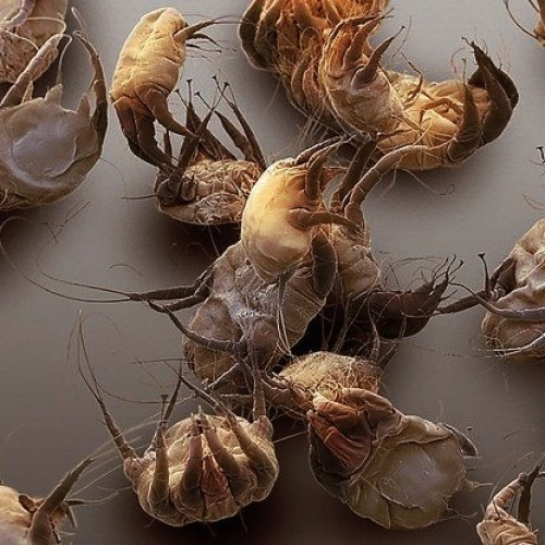 dezintox средство от паразитов