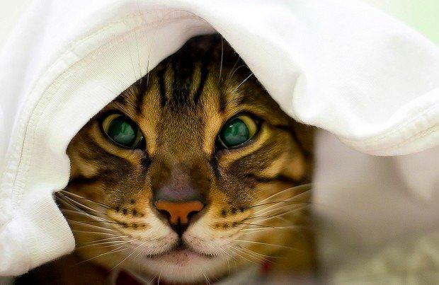 Простуда у кота лечение