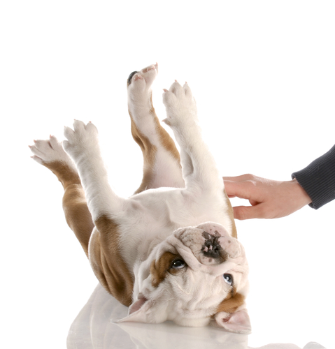 Собака чешется и лысеет чем лечить