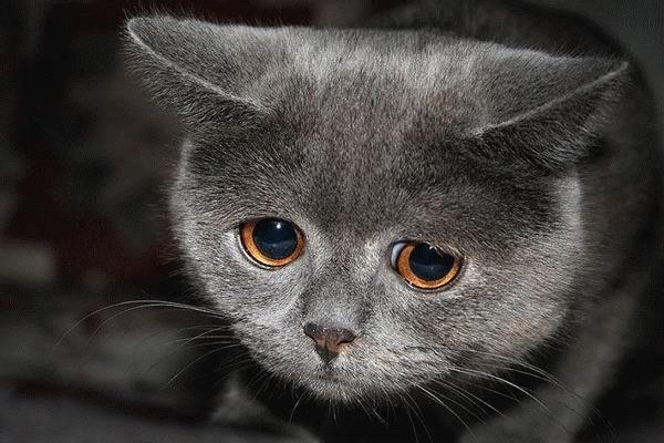Как коты умирают от старости