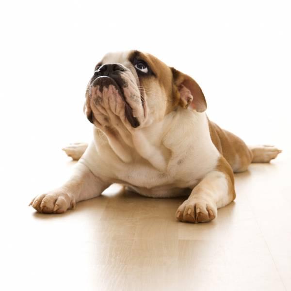 У собаки после родов кровянистые выделения