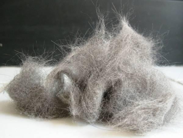 У кота выпадает шерсть на животе