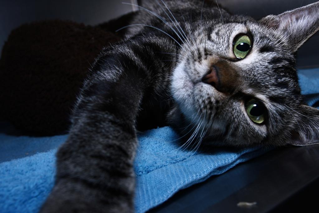 У кота нефрит почек