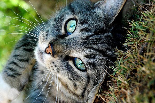 У беременной кошки кровяные выделения