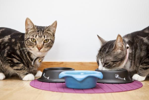 Чем кормить кошку, чтобы она поправилась: правила питания