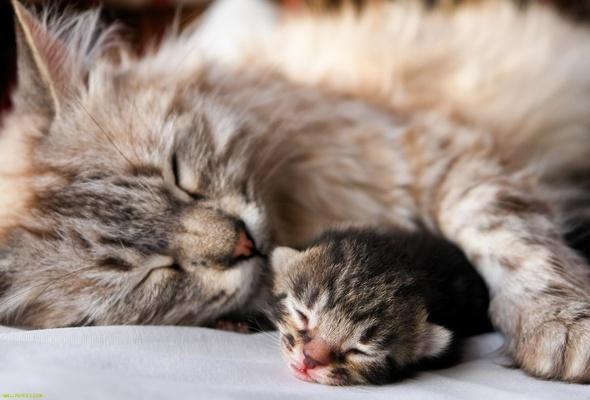 Выделения у кошки после родов. Распознаём опасность