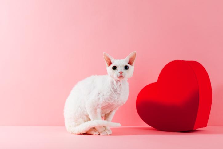 Симптомы сердечной недостаточности у кота