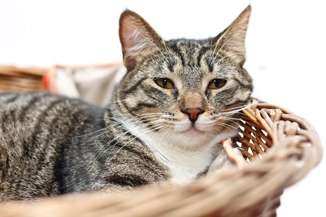 Лечение артроза у кота