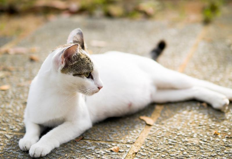 Токсикоз при беременности у кошки