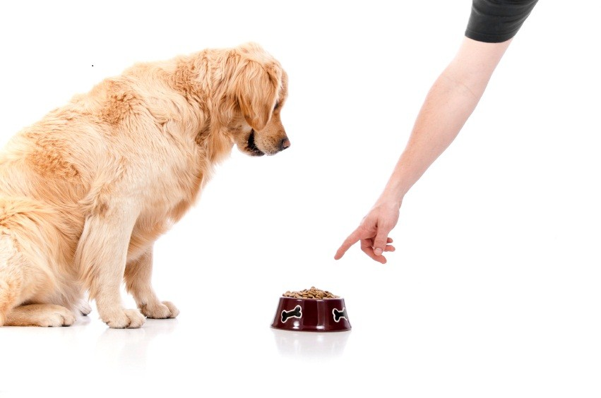 Food aggression in dogs towards cats