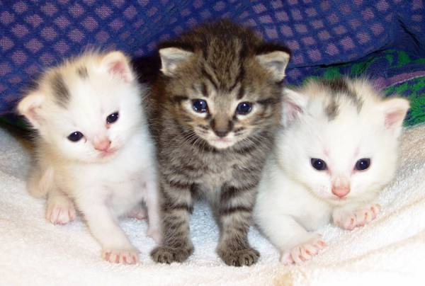 Чем кормить котят 3 месяца