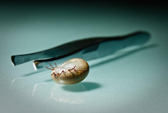 чем опасны паразиты в организме человека