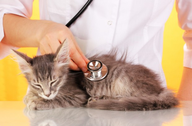 кошек - причины, симптомы