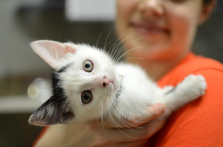 лечение простатита у кошек