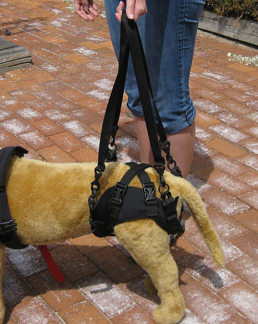 How To Carry A Large Dog Upstairs