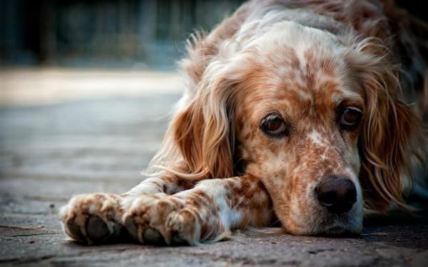 Причины и способы устранения вздутия живота у собаки