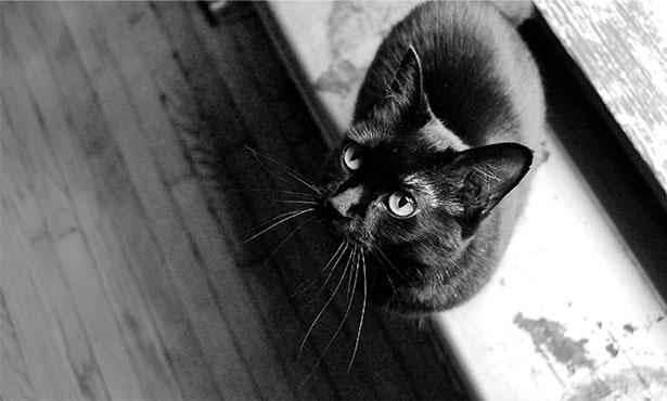 Как пережить смерть кота от психолога