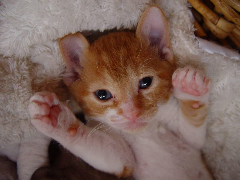 Когтеточки для котенка своими руками 6